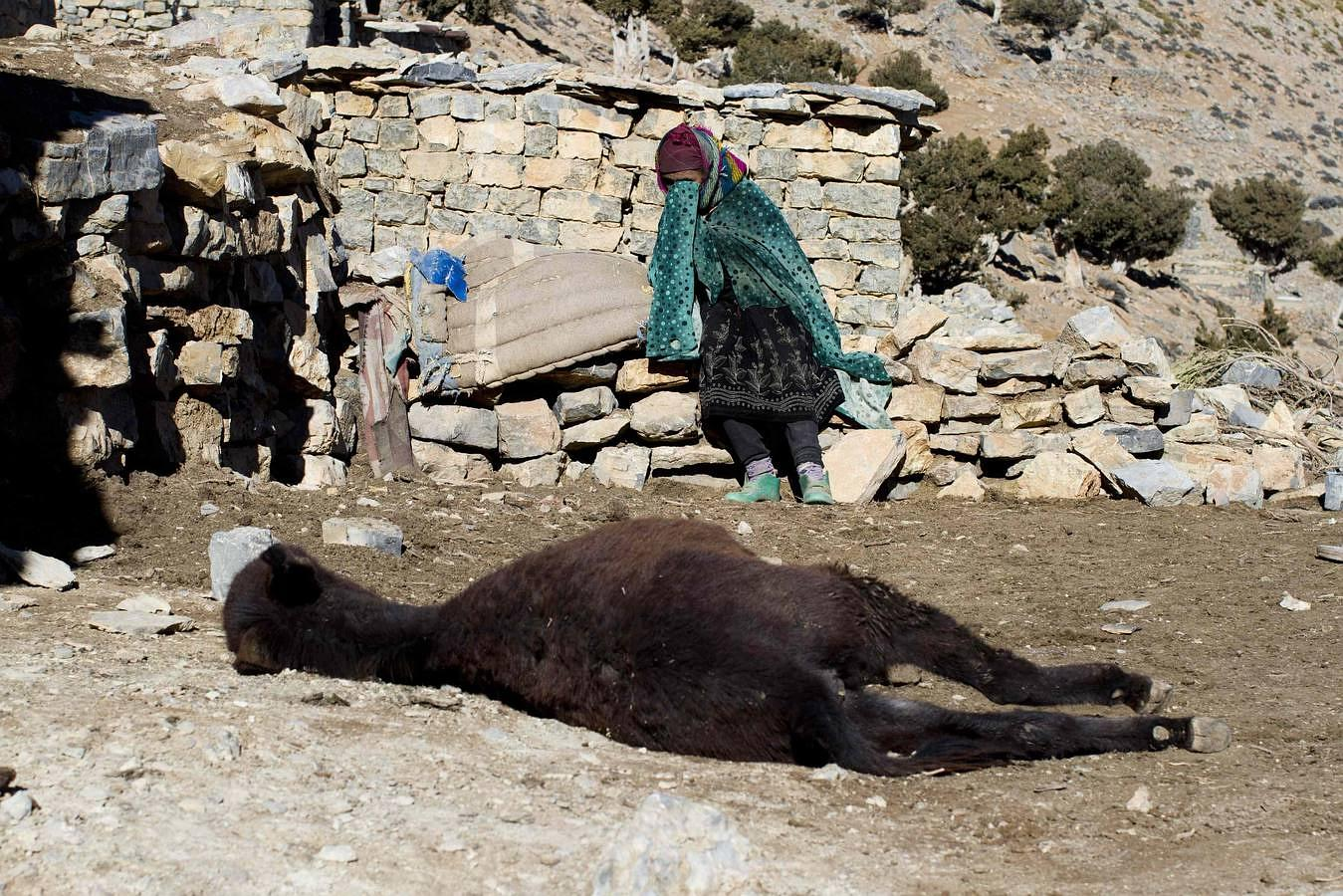 Una mujer llora por la muerte de su burro en la aldea bereber de Ait Sghi, en las montañas del Atlas de Marruecos