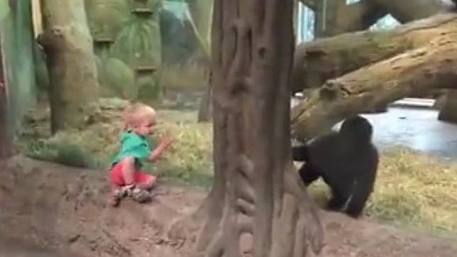El juego del escondite de un niño y un gorila más divertido de Facebook