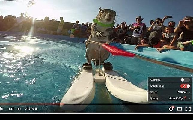 YouTube luce en sus vídeos la nueva barra de control transparente