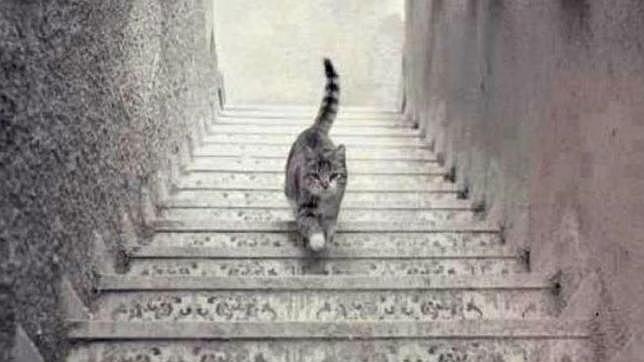 La imagen que divide a Twitter: ¿El gato sube o baja las escaleras?