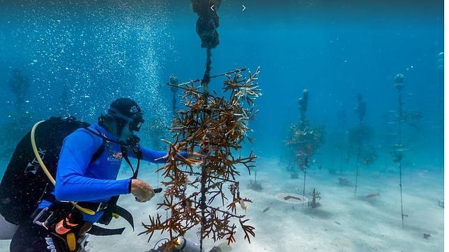 Google vuelve a sumergirse en los océanos con Street View