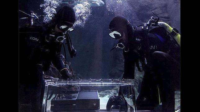 Tiburones tigres protegen la primera Xbox One que se pondrá en venta