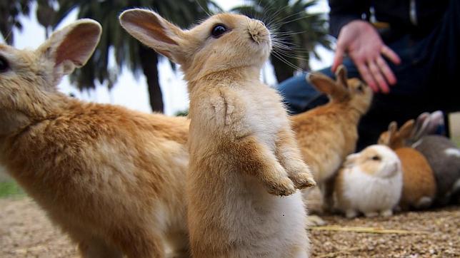 La historia de la isla de los conejos