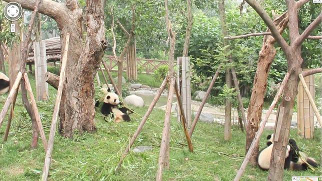 Google añade imágenes de zoos de todo el mundo a Google Street View