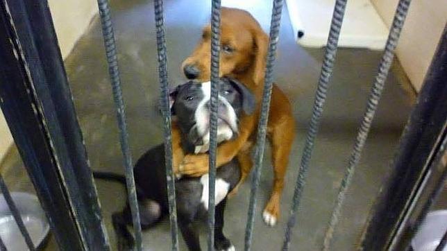 El emotivo abrazo entre dos «perritas» que las salvó de la eutanasia