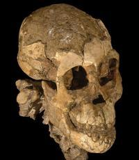 Resultado de imagen de El Cráneo de Lucy